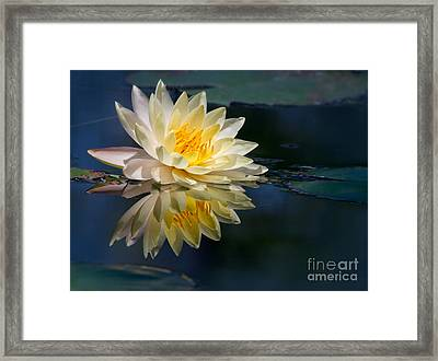 Beautiful Water Lily Reflection Framed Print