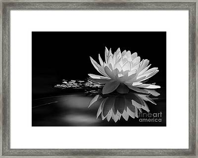 Beautiful Water Lily Reflections Framed Print