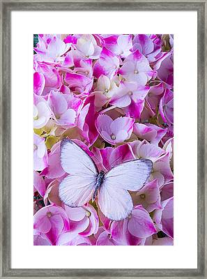 Beautiful White Butterfly Framed Print