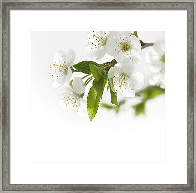 Beautiful White Flower Framed Print by Boon Mee