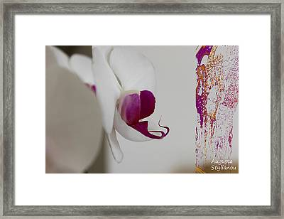 Beautiful White Orchid Framed Print by Augusta Stylianou