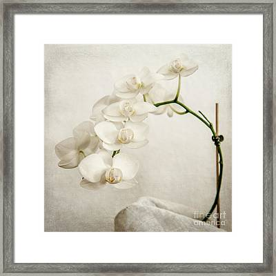 Beautiful White Orchid II Framed Print by Hannes Cmarits