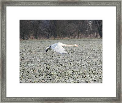 Beautiful Wild Geese Framed Print