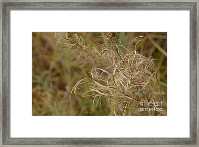 Beautiful Wild Plant Framed Print by Jolanta Meskauskiene