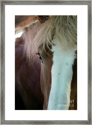 Framed Print featuring the photograph Beautiful Within Him Was The Spirit - 1 by Linda Shafer