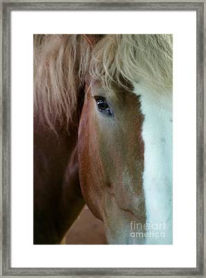 Framed Print featuring the photograph Beautiful Within Him Was The Spirit - 2 by Linda Shafer
