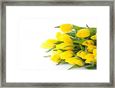 Beautiful Yellow Tulips Framed Print by Boon Mee