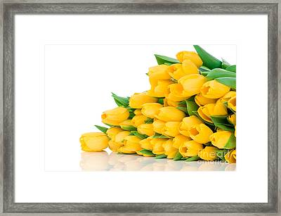 Beautiful Yellow Tulips Valentine Framed Print by Boon Mee