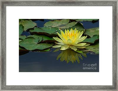 Beautiful Yellow Water Lily Framed Print