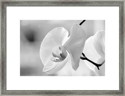 Beautifully Soft Framed Print by Silke Brubaker