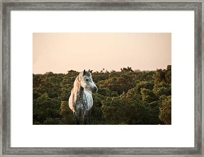 Beauttiful Close Up Of New Forest Pony Horse Bathed In Fresh Daw Framed Print by Matthew Gibson