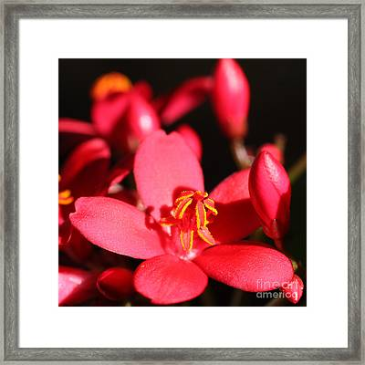 Beauty - Square Framed Print