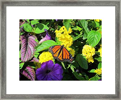 Framed Print featuring the photograph Beauty All Around by Cynthia Guinn
