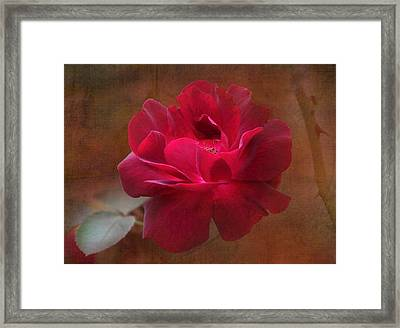Beauty Among Thorns Framed Print by Angie Vogel