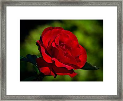 Beauty And Charm Framed Print