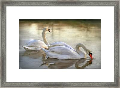 Beauty And Grace Framed Print by Hazel Billingsley