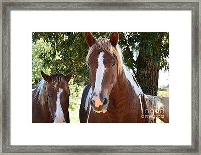 Beauty And Her Best Friend Framed Print by Barbara Dalton