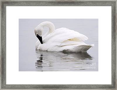 Beauty And Reflection Framed Print