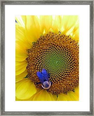 Beauty And The Bee Framed Print by Laura Corebello
