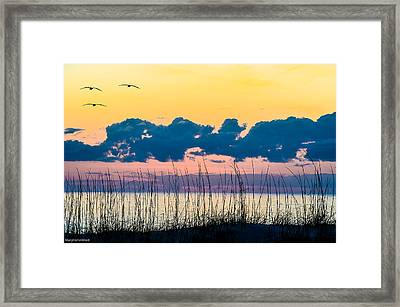 Beauty And The Birds Framed Print