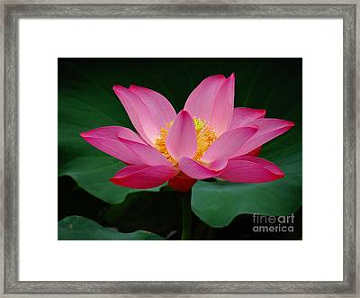 Beauty And The Deep Framed Print by Olivia Blessing