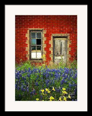 Texas Bluebonnets Framed Prints