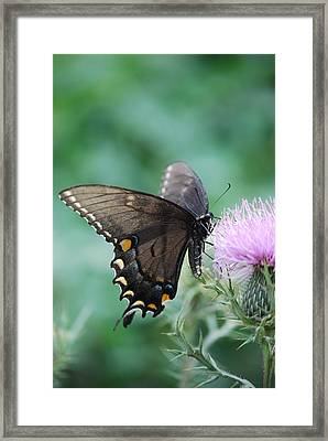 Beauty And Thistle Framed Print