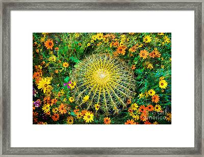 Beauty Around Thorns Framed Print by Jeanette Brown