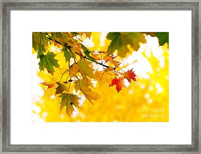 beauty Autumn Leaves Framed Print by Boon Mee