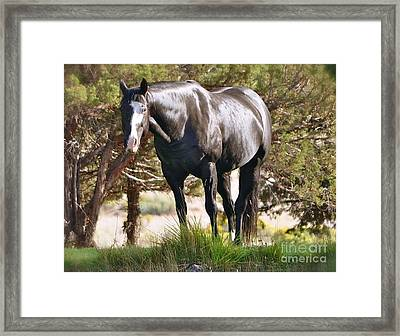 Framed Print featuring the photograph Beauty by Barbara Dudley