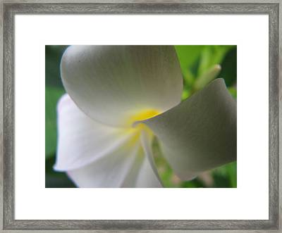Framed Print featuring the photograph Beauty by Beth Vincent