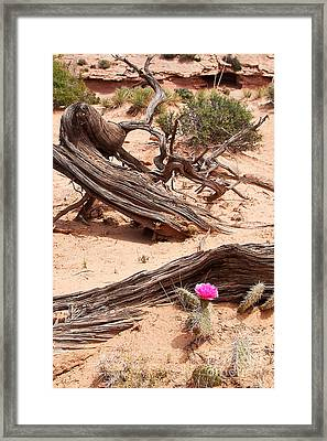 Beauty Blooming Framed Print by Bob and Nancy Kendrick