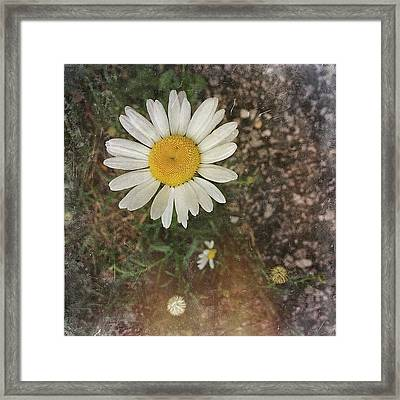 Beauty Can Be Found, But Is Often Framed Print