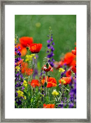 Beauty Colorful Flowers Framed Print by Boon Mee