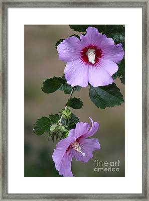 Beauty Doubles Framed Print