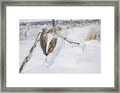Beauty Encapsulated Framed Print
