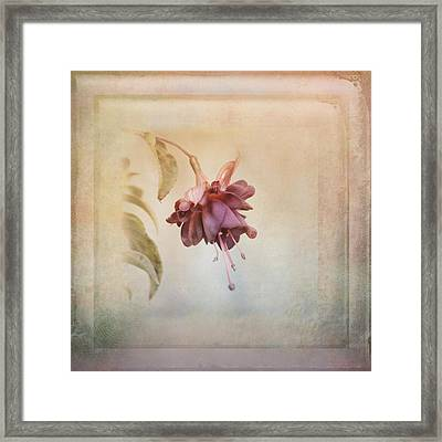 Beauty Fades Softly Framed Framed Print