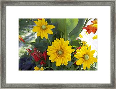 Beauty Flowers Framed Print by Jocelyne Choquette