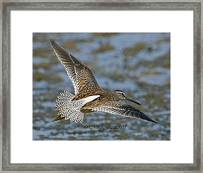 Beauty From Above Framed Print