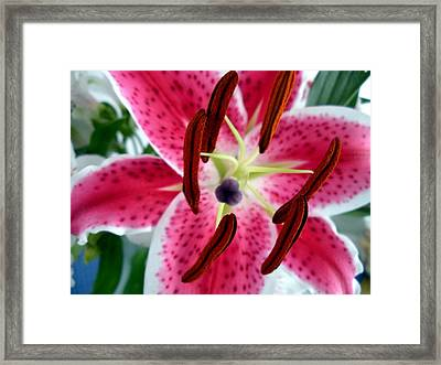 Beauty From The Inside Out Framed Print