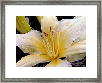 Beauty Framed Print by George Tuffy