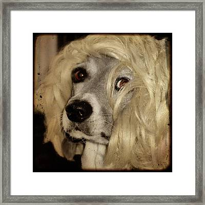 Beauty Framed Print by Gothicrow Images