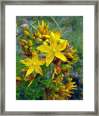 Beauty In A Weed Framed Print