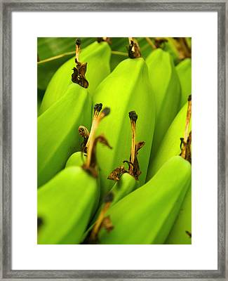 Beauty In Bannanas Framed Print by Justin Woodhouse