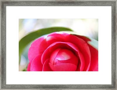 Beauty In Bloom Framed Print