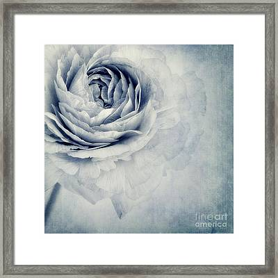 Beauty In Blue Framed Print by Priska Wettstein