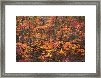 Beauty In Chaos Framed Print by Peter Coskun