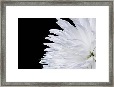 Beauty In Contrast Framed Print
