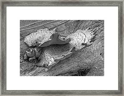 Beauty In Decay - Tree Fungus Bw Framed Print by Gill Billington