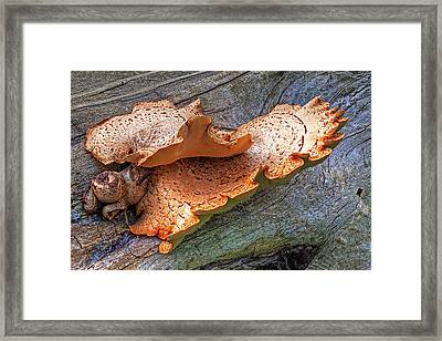 Beauty In Decay - Tree Fungus Framed Print by Gill Billington